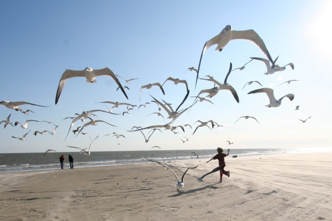 Flock_of_Seagulls